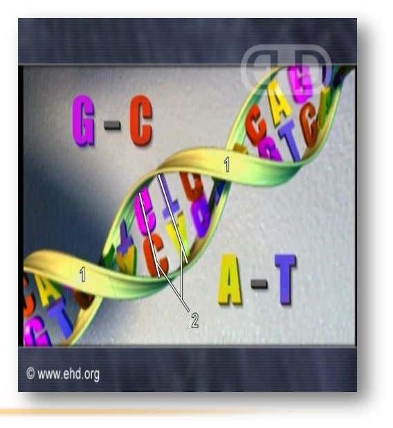 DNA These four bases are linked in a repeated pattern by hydrogen bonding between the nitrogen