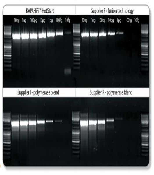 TARGET AMPLIFICATION • Target amplification requires that the DNA to be tested for be amplified, i.e.,