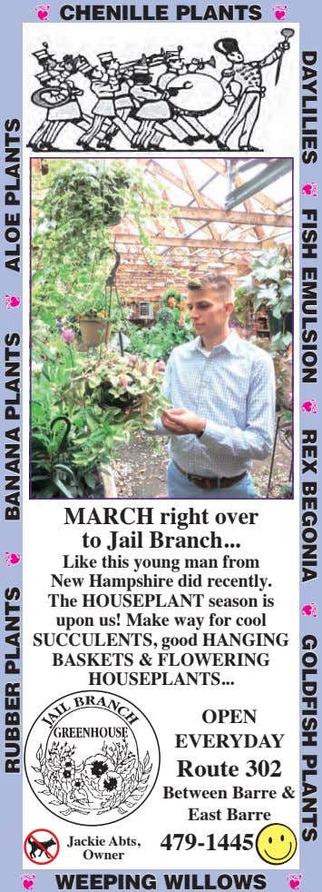 ❦ CHENILLE PLANTS ❦ MARCH right over to Jail Branch ... Like this young man from