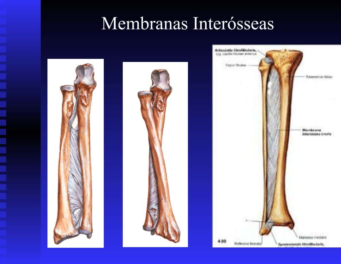 Membranas Interósseas