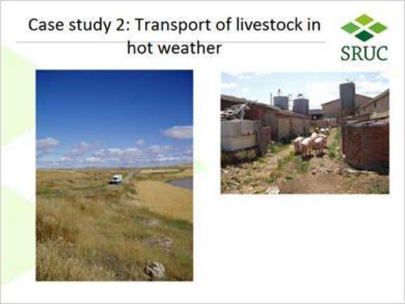 1.31 Transport of livestock in 1.32 Pigs transported from within Spain Published by Articulate® Storyline