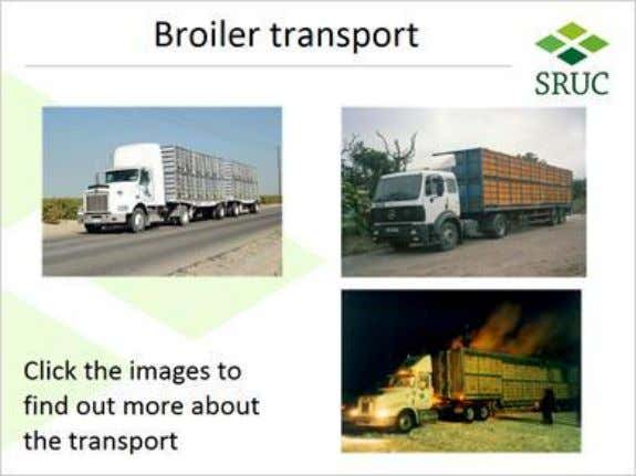 1.13 Broiler transport US truck (Slide Layer) Published by Articulate® Storyline www.articulate.com