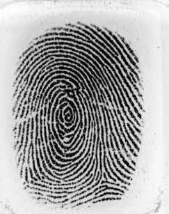 Management & Engineering, NMIMS University Mumbai, India Figure.1. Typical fingerprint as scanned by optical
