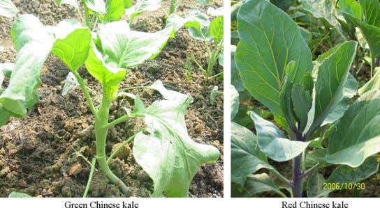and leaf Chinese kale; (B) Stalk Chinese kale; (C) Leaf Chinese kale. Fig. 3 Chinese kale