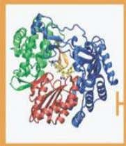 Protease NS5A Polymerase Inhibitors Inhibitors Inhibitors Modificado de T Asselah & P Marcellin, 2012