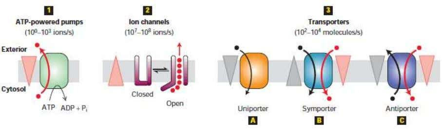 requires the assistance of specialized membrane proteins. Figure 3.9 Membrane transport proteins 1. Pumps utilize the