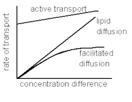Rate of transport Figure 3.10 Rate of transport versus concentration difference plot 3.2.3. Osmotic Pressure 