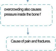 overcrowding also causes pressure inside the bone f Cause of pain and fractures.