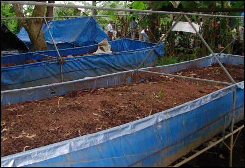 A total of 8 units of 1 m x 5 m earthworm plots were constructed on