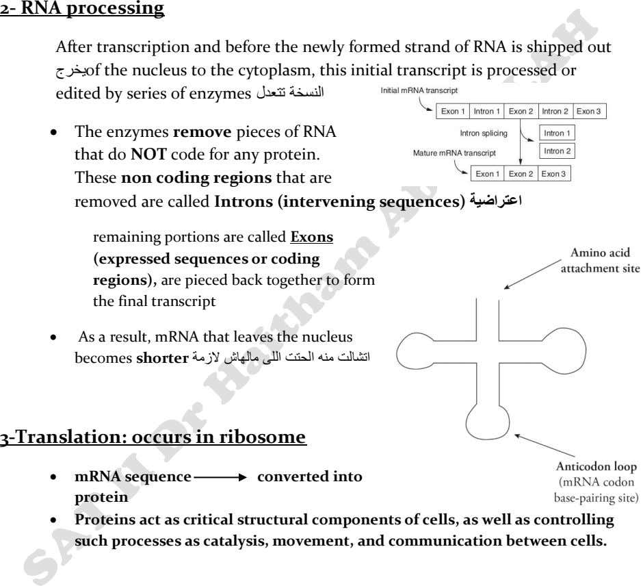2- RNA processing After transcription and before the newly formed strand of RNA is shipped
