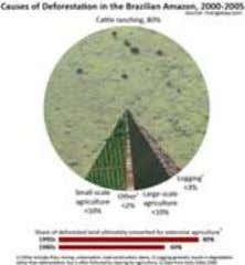 in the Brazlian Amazon, 1988-present context of the image [ large medium small ] Causes of