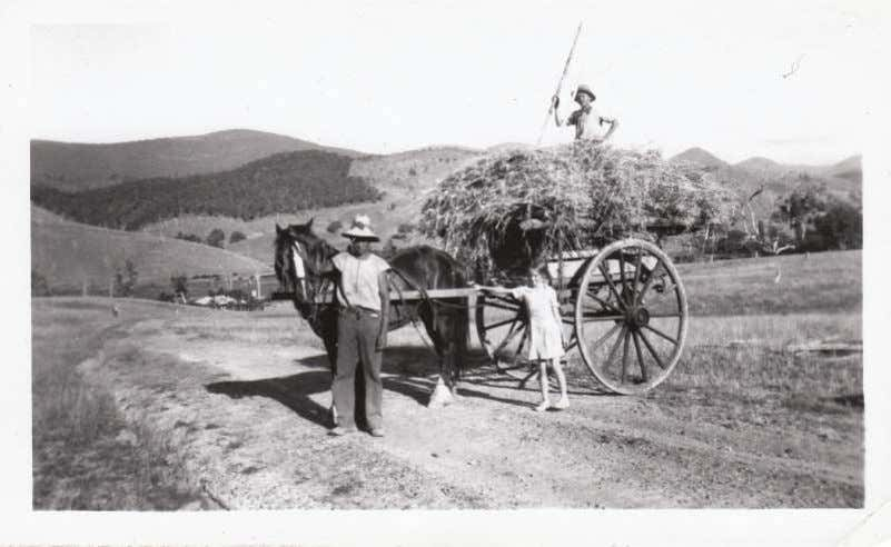 "suitable for events. Priced from $1.10 ea. Phone 62279229 ""Carting Hay at Sunny Corner, Wee Jasper"""
