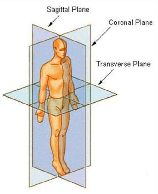 clients,' Chapter 4, Pg 173. Anatomical plane of movement Sagittal Plane : A vertical plane, passing