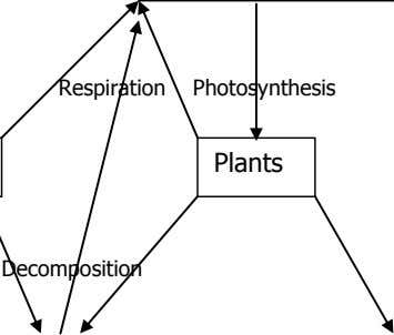 Respiration Photosynthesis Plants Decomposition