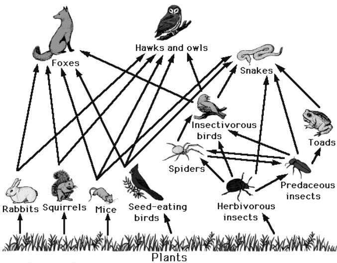 following, identify as a biotic or abiotic factor: a. b. c. d. Use the food web