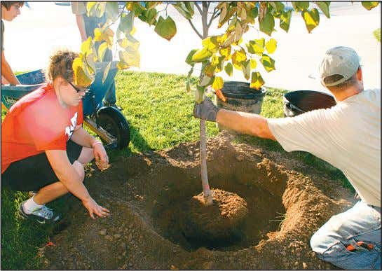Stacy Taff photo Students, volunteers plant trees at school Fort Jennings High School and its