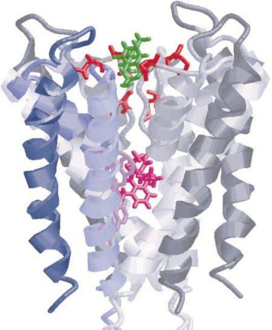 VGSC(2) Pink: Local anesthetic binding site in the inner cavity of the pore In Segment 6