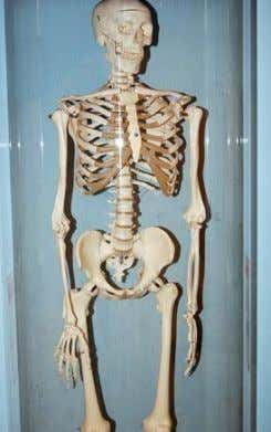 Photo Credit skeleton image by JASON WINTER from Fotolia.com More than 30 percent of women over