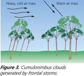 Heavy, cold air mass Warm air mass Figure 3. Cumulonimbus clouds generated by frontal storms.