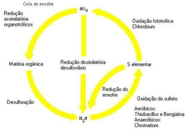 Ciclo do enxofre: