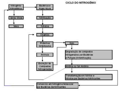 Ciclo do nitrogênio (N 2 ):