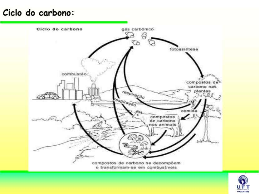 Ciclo do carbono: