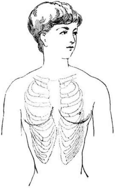 healthy person, with special reference to the chest. Fig. 17. The appearance of the chest after