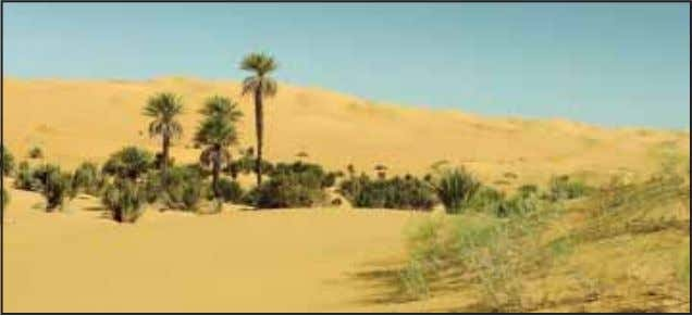 and lizards are the prominent animal species living there. Fig. 10.3: Oasis in the Sahara Desert