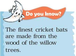 Do you know? The finest cricket bats are made from the wood of the willow