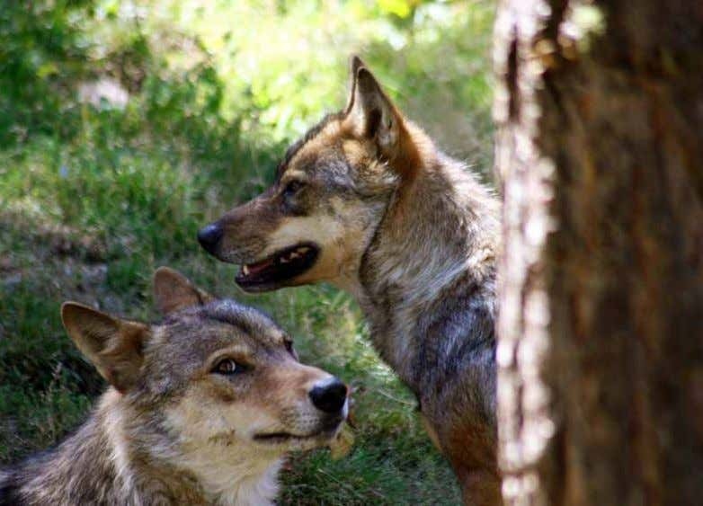 PLAN D'ACTION NATIONAL LOUP 2013-2017