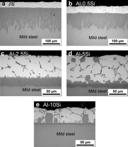 the topcoats and steel substrates of mild steel hot-dipped Fig. 1. Cross-sectional OM micrographs of mild