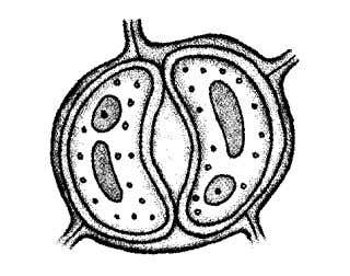 3. Diagram 3 shows a structure found in plants Diagram 3 a) Label stoma in the