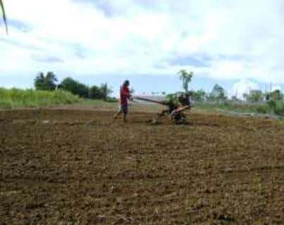 III PREPARE THE LAND FOR PLANTING RICE (IRRIGATED/RAINFED) Photo Courtesy Dr. Pedrito S. Nitural, Faculty, College