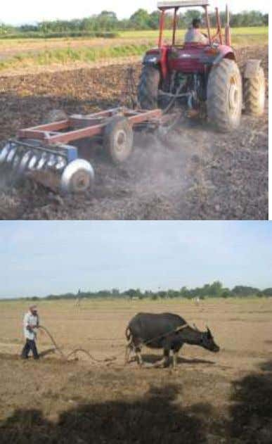 Photo Courtesy of Bersamin Agro-Industrial High Sch ool Plowing is the process of breaking up