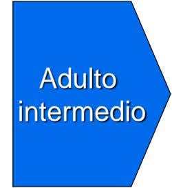 Adulto intermedio