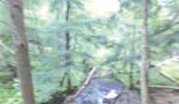 HIDDEN HAVEN! Wooded 20 acre site with mixed hardwoods and conifers! Small stream crosses northwest