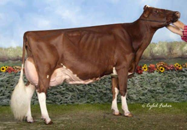 Ohio Holstein 2018 Convention Sale ~ March 9, 2018 Dam: KHW REGIMENT APPLE-RED-ET EX-96 4E DOM