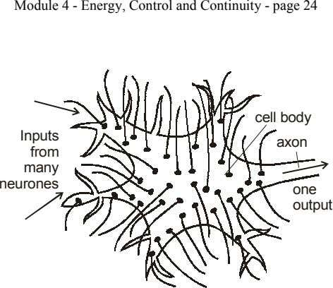 Module 4 - Energy, Control and Continuity - page 24 cell body Inputs axon from