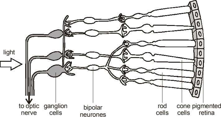 light to optic ganglion rod cone pigmented bipolar nerve cells cells cells retina neurones