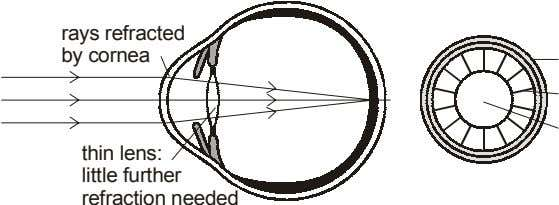 rays refracted by cornea thin lens: little further refraction needed