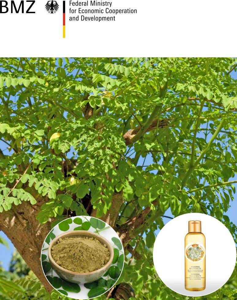 Moringa Products: Opportunities and Challenges for Mozambique Publicado por: