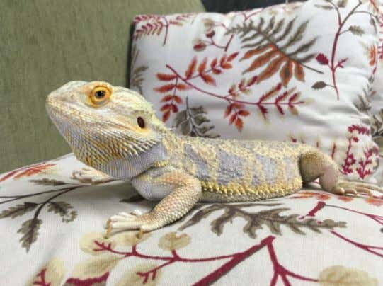 Winter is approaching, and those of you with pet reptiles might notice a change in