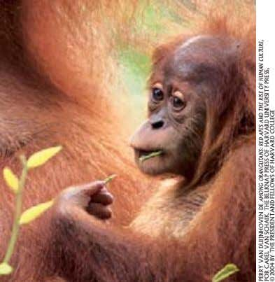 PERRY VAN DUIJNHOVEN DE AMONG ORANGUTANS: RED APES AND UNIVERSITY THE RISE OF PRESS, HUMAN
