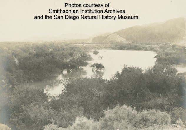 Photos courtesy of Smithsonian Institution Archives and the San Diego Natural History Museum.