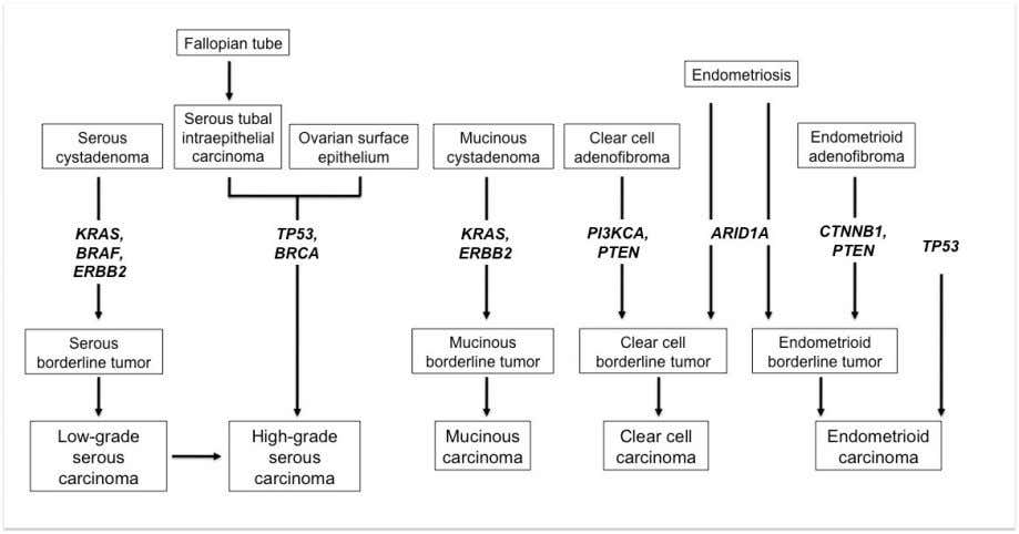 Figure 1.1 The chart illustrates the pathogenesis of epithelial ovarian cancers. Low-grade serous carcinomas arise from