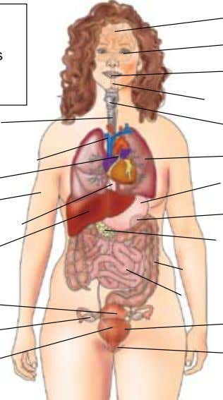 Blood Vessels Heart Skin Esophagus Liver Uterus Ovary Cervix Brain Eyes Mouth Spinal Cord Thyroid Lung