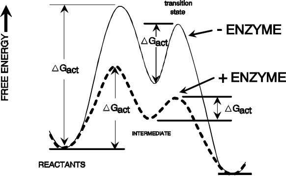 ( ∆ G a c t ) (don't change overall equilibrium) Catalysis mechanisms : 1. Organization