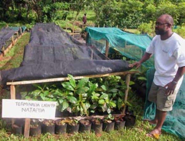 freshly harvested fully mature fruit. Propagation  of  seedlings  of  better  nut