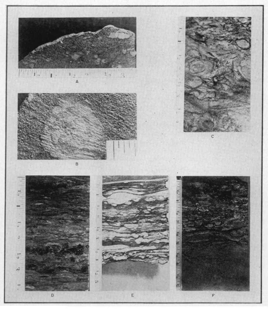 2748 D. G. MOORE AND P. C. SCRUTON FIG. 15.—Mottles in ancient rocks. (A) Eocene of