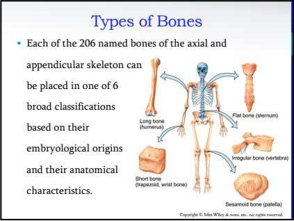 Types of Bones • Each of the 206 named bones of the axial and appendicular
